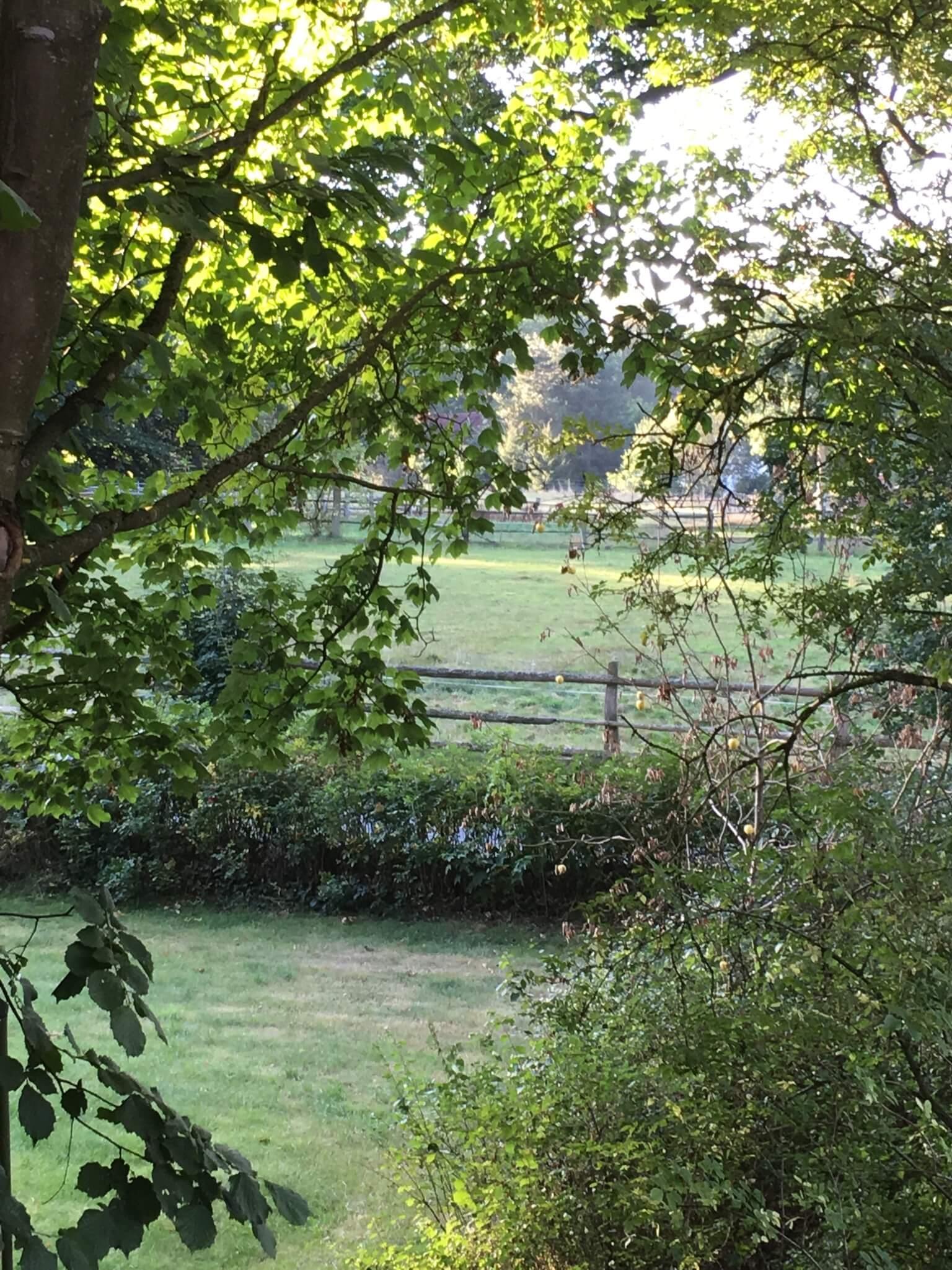Blick nach draußen durch die Bäume über die Weiden